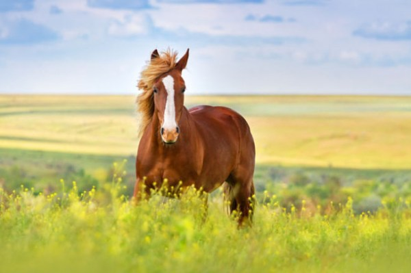 Лошади - красивые картинки (40 фото) • Прикольные картинки ...
