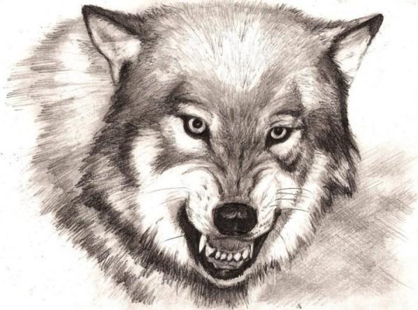 Рисунки волка для срисовки (40 фото) • Прикольные картинки ...