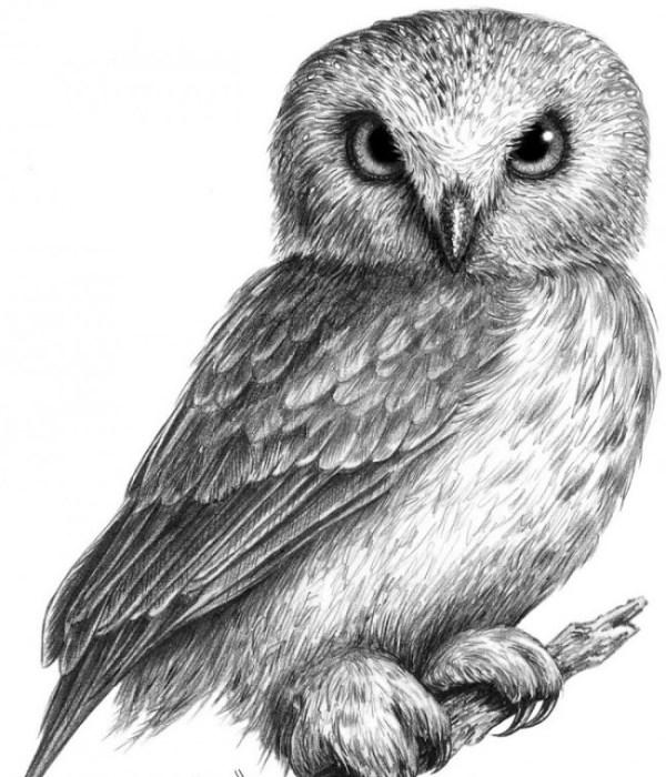 Рисунки совы для срисовки (37 фото) • Прикольные картинки ...
