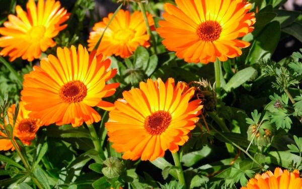 Оранжевый цвет - красивые картинки (40 фото) • Прикольные ...