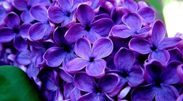 Фиолетовый цвет - красивые картинки (40 фото) • Прикольные ...