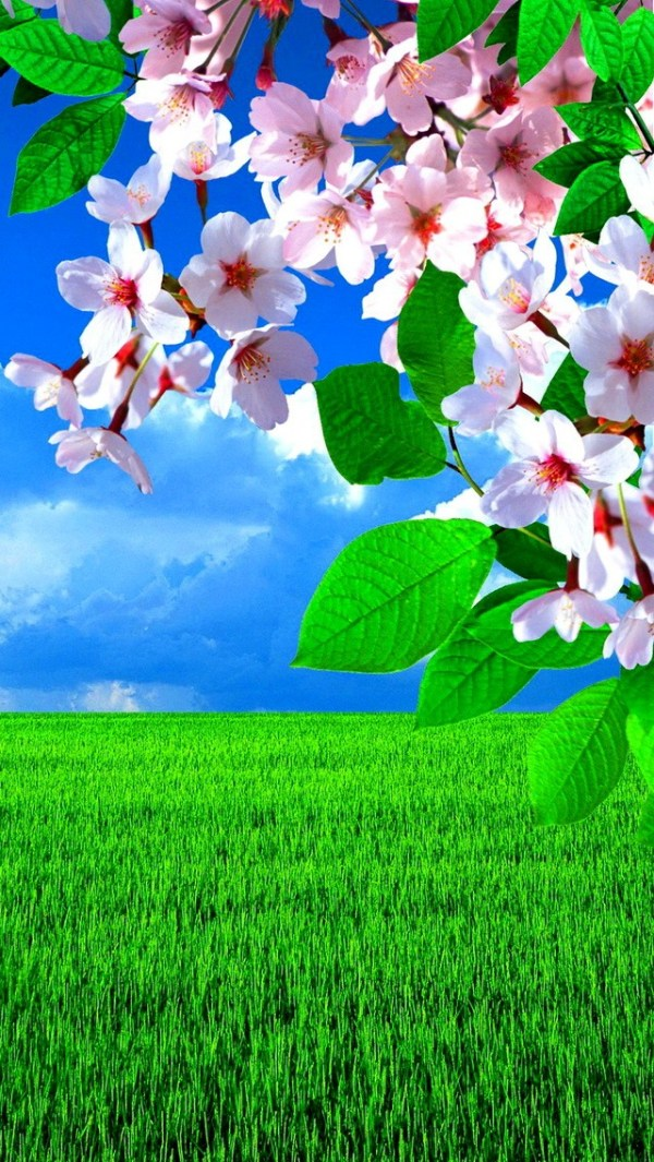 Картинки весна на заставку телефона (47 фото) • Прикольные ...