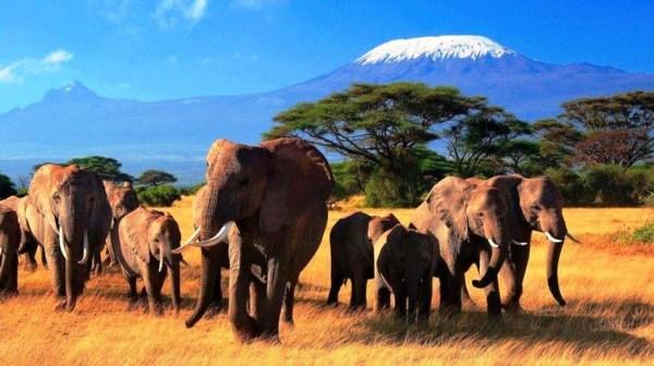 Красивые картинки Африки (40 фото) • Прикольные картинки и ...