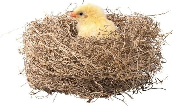 Картинки гнездо (22 фото) • Прикольные картинки и позитив