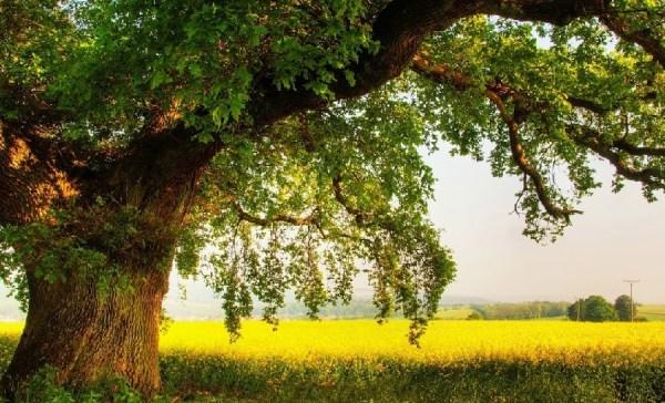 Картинки дуб (30 фото) • Прикольные картинки и позитив