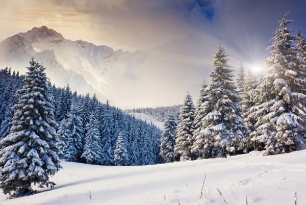Картинки зимний лес (40 фото) • Прикольные картинки и позитив