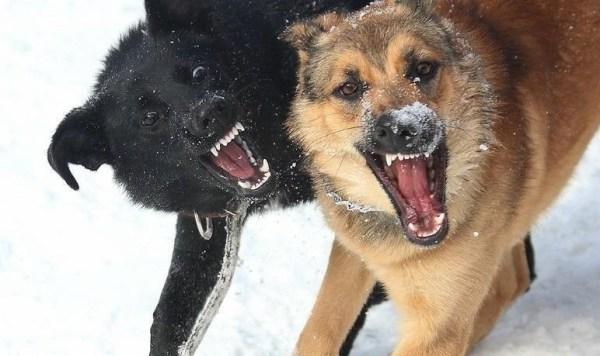 Картинки злых собак (30 фото) • Прикольные картинки и позитив
