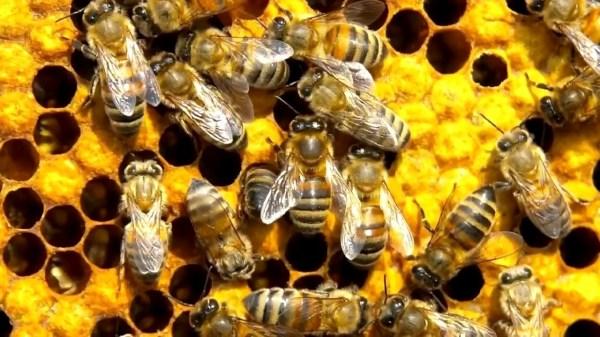 Пчелы - красивые картинки (40 фото) • Прикольные картинки ...