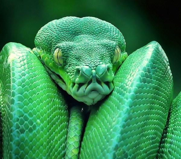 Картинки ядовитых змей (40 фото) • Прикольные картинки и ...