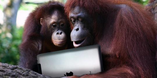 Ketika orangutan juga ikut-ikutan pakai iPad