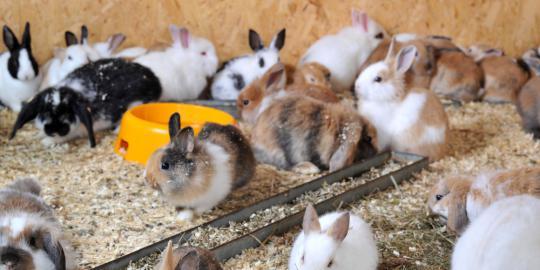 Dahlan: Program ternak kelinci siap untuk entaskan kemiskinan