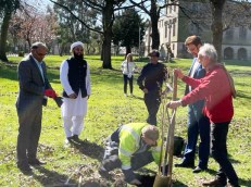 Afzal Khan MP in tree plantation ceremony in memory of Covid-19 victims (1)