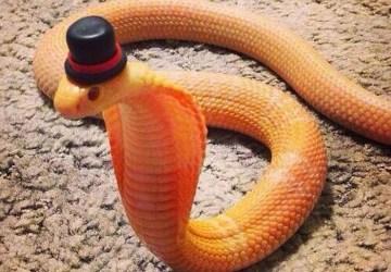 Rozkošné hady s klobúkmi. Azda nový štýl elegancie?
