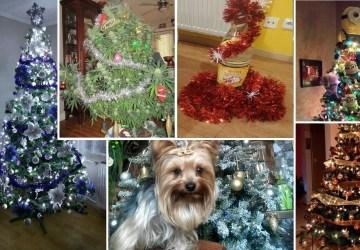 Slováci mali ukázať svoje vianočné stromčeky. Ukázali TOTO!  Je tam aj ten váš?