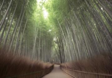 Milujete prechádzky v prírode? Z týchto prekrásnych mystických lesov vám spadne sánka