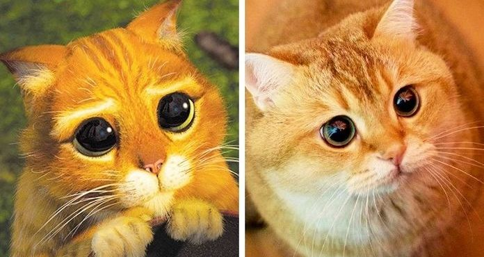 Toto ti zaručene zlepší deň: Zvieratká, ktorých podoba s animovanými postavičkami priam identická