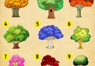 Výber stromu ti prezradí, aký bude rok 2018! Zisti, aké zmeny ťa čakajú