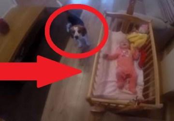 VIDEO, ktoré vás nenechá chladnými: Bábätko sa rozplakalo v postieľke, psík na to takto zareagoval