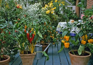 8 tipov ovocia a zeleniny, ktoré ľahko dopestujete na balkóne