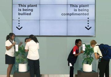 IKEA sa rozhodla pre zvláštny experiment. Požiadala ľudí, aby po dobu 30 dní dávali jednej rastline komplimenty a druhej nadávali. Pozrite sa, ako to dopadlo