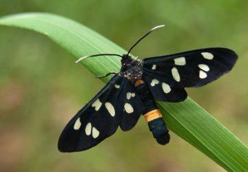 V Bratislave poletuje veľké množstvo takýchto motýľov. Sú nebezpečné?