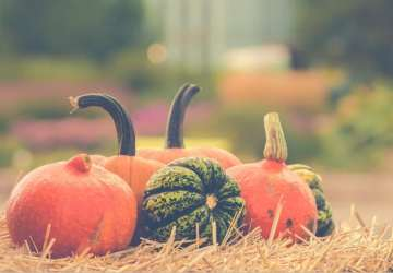 Dôvody, pre ktoré sa oplatí tešiť na jeseň