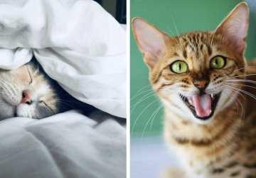 Niečo pre milovníkov mačiek: Pozrite sa na týchto 5 rozkošných fotiek. Je váš miláčik pohoďák či špekulant?