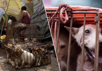 Kórejské mesto bojuje za humánne zaobchádzanie so zvieratami a zatvára psie bitúnky, predtým väčšinu psov odchytili a utratili