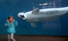 Toto je 17 najkomickejších fotiek zvieratiek, aké ste kedy videli