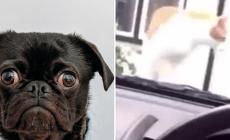 Vysmiaty pes alebo preľaknutá mačka. Toto je top 20 najvtipnejších vines videí