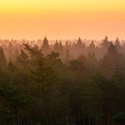 Toppen van een bos tijdens zonsopkomst