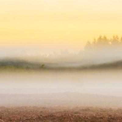 Mist stroken op de Veluwe