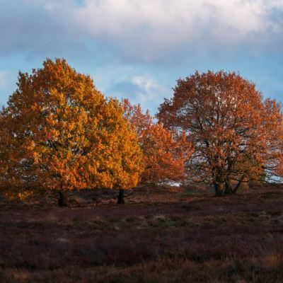 herfstbomen veluwe