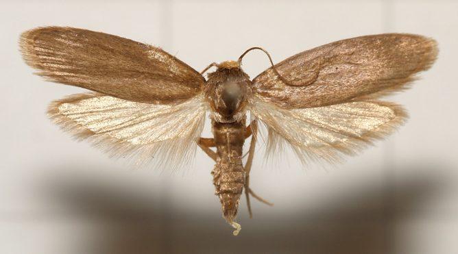 infúziós méhek a prosztatitisből