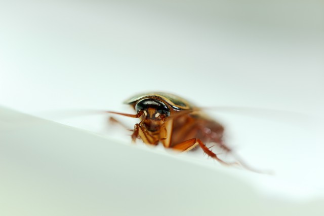 Фобия: как называется боязнь пауков одним словом, боязнь тараканов