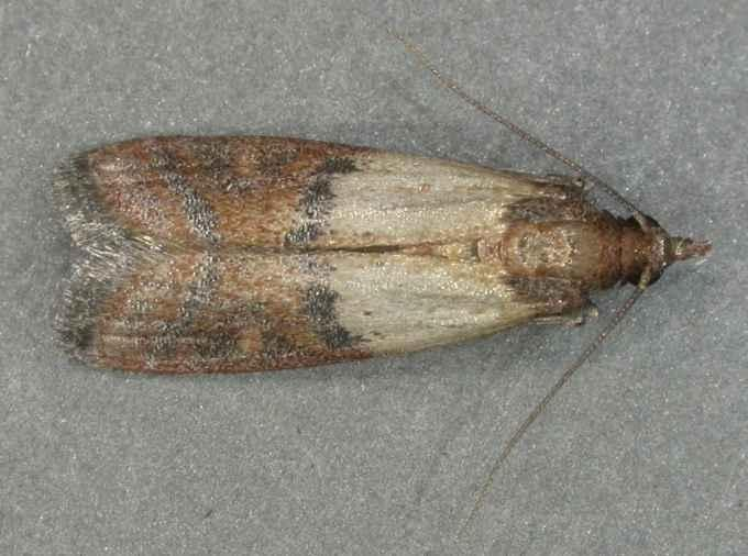 tratamentul articulațiilor molii