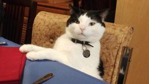 Zen Cat sitting at dinner table