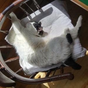 Zen Cat sleeping twisted around