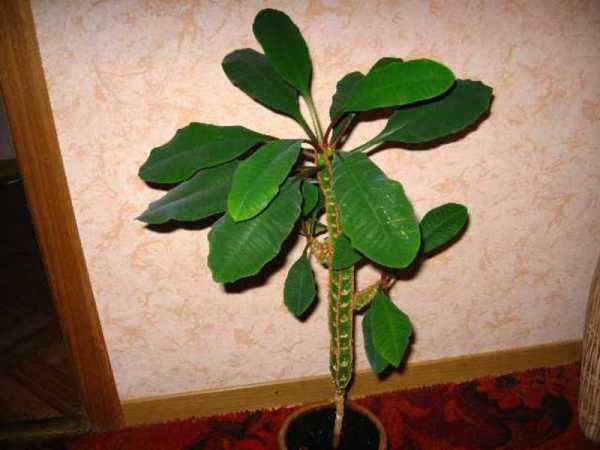 Ядовитые цветы названия ядовитых растений меры защиты от