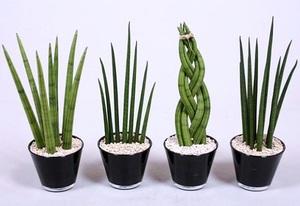 Тенелюбивые комнатные растения: название, описание и фото ...