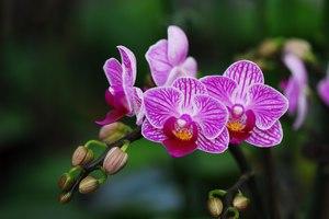 Фото Вид Орхидей