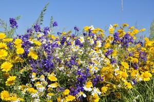 Какие есть виды полевых цветов: разновидности растений ...