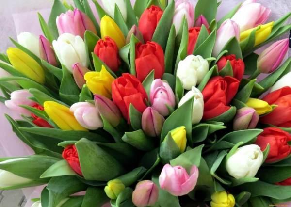 Как вырастить тюльпаны к 8 марта в домашних условиях ...