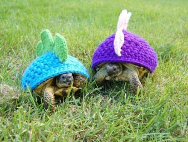 animals in sweaters 10 Adorable Animals Wearing Sweaters (35 photos)