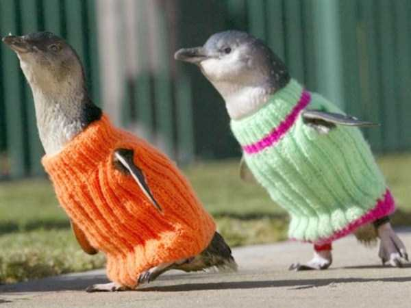 animals in sweaters 11 Adorable Animals Wearing Sweaters (35 photos)