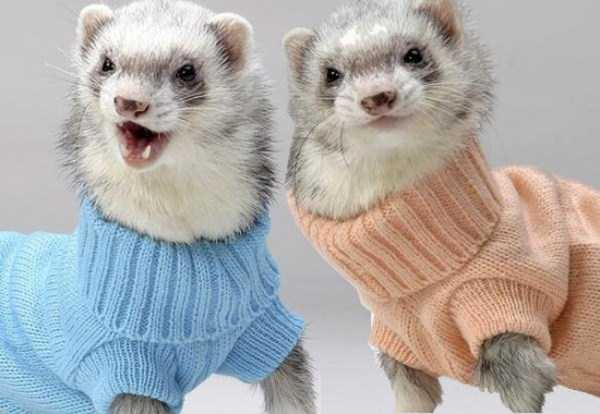 animals in sweaters 14 Adorable Animals Wearing Sweaters (35 photos)