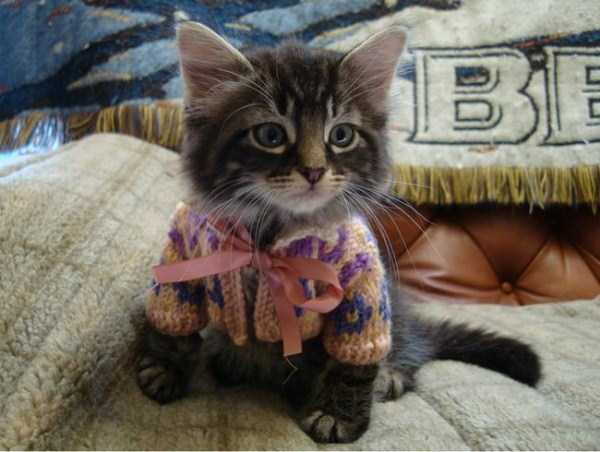 animals in sweaters 22 Adorable Animals Wearing Sweaters (35 photos)