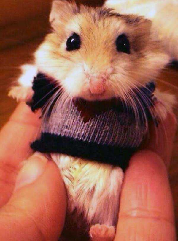 animals in sweaters 30 Adorable Animals Wearing Sweaters (35 photos)