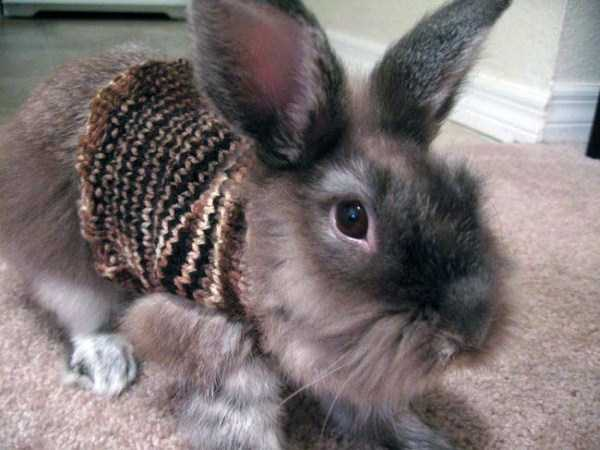 animals in sweaters 5 Adorable Animals Wearing Sweaters (35 photos)