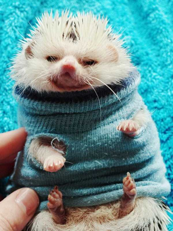 animals in sweaters 9 Adorable Animals Wearing Sweaters (35 photos)